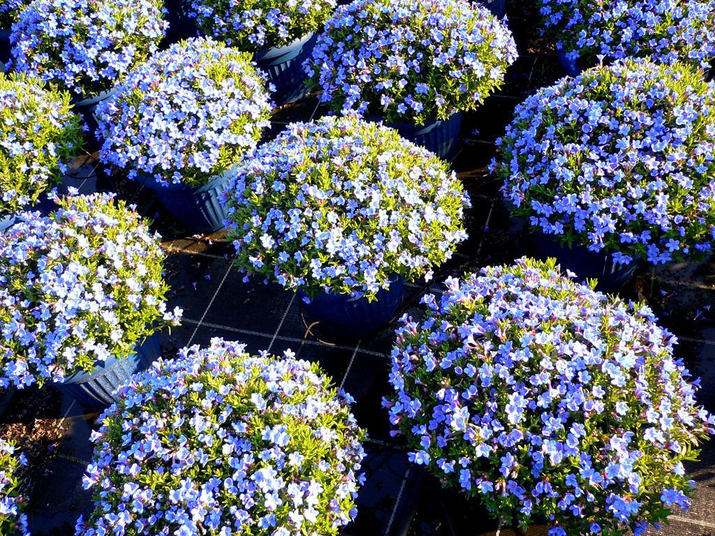 Юг цветы телефон